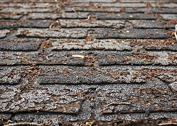 Curling Shingles